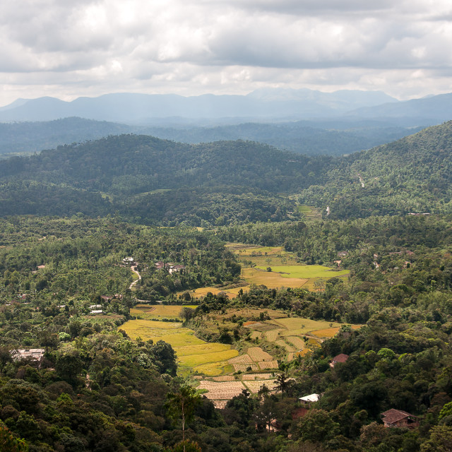 """""""The countryside around Madikeri"""" stock image"""