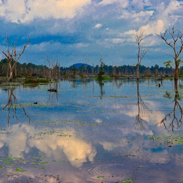 """Dead Trees Siem Reap Cambodia"" stock image"