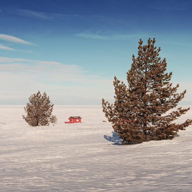 """""""Pine Trees On An Icy Beach"""" stock image"""