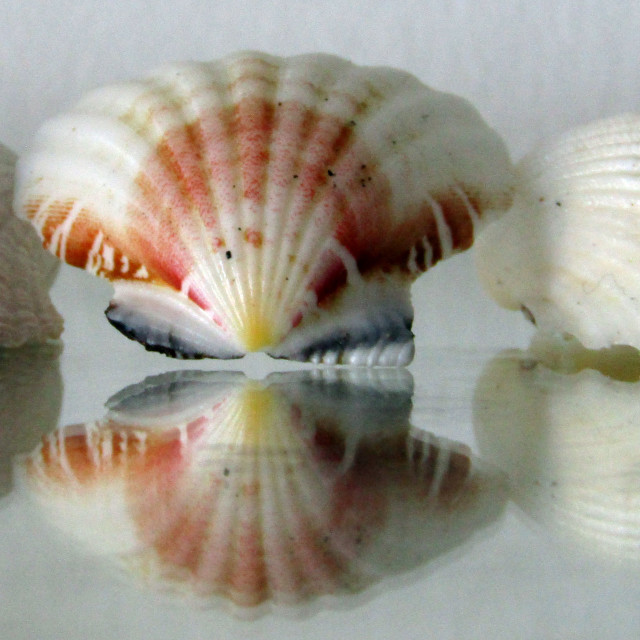 """Reflection of Sea Shells"" stock image"