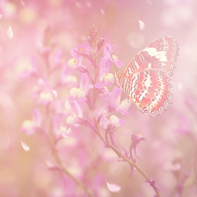 """Butterfly in Spring"" stock image"