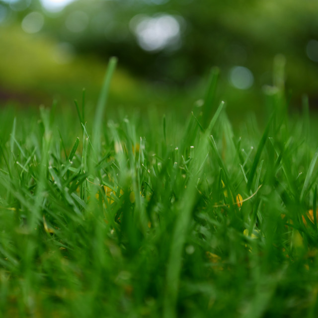 """Green grass close up"" stock image"