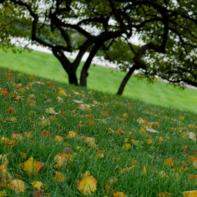 """Green grass and golden leaves"" stock image"