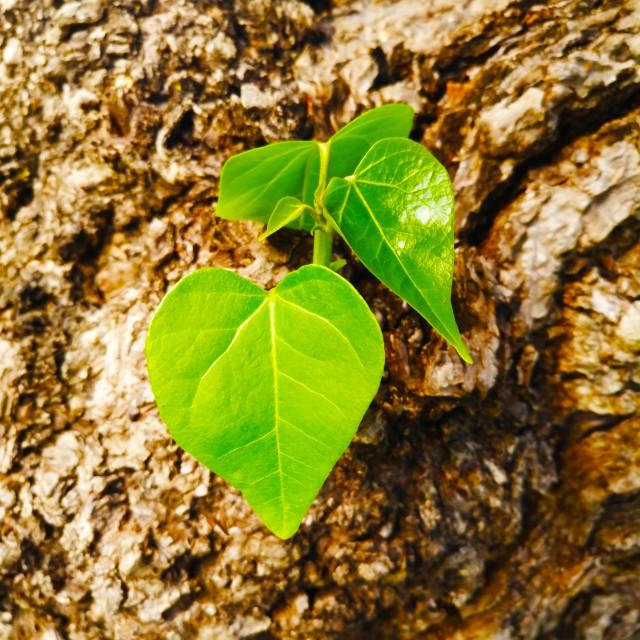 """""""leaf in kahului"""" stock image"""