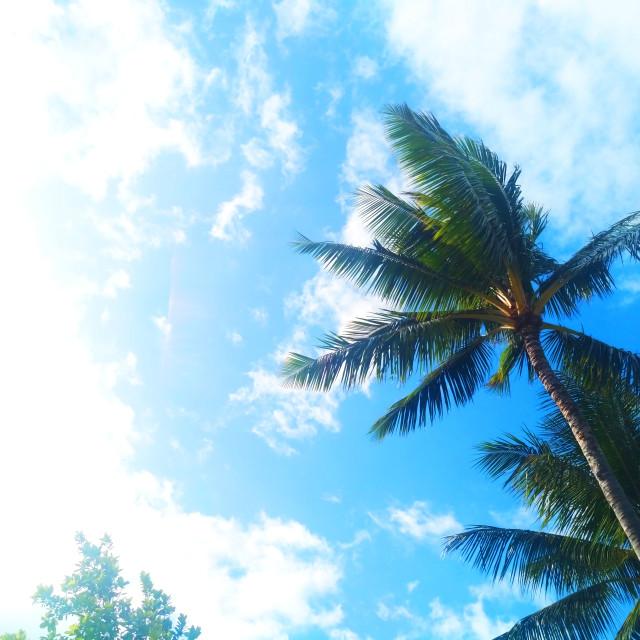 """coconut in kahului"" stock image"