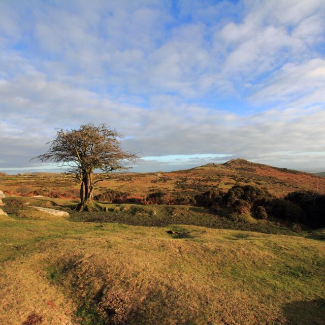"""Dartmoor Reflections"" stock image"