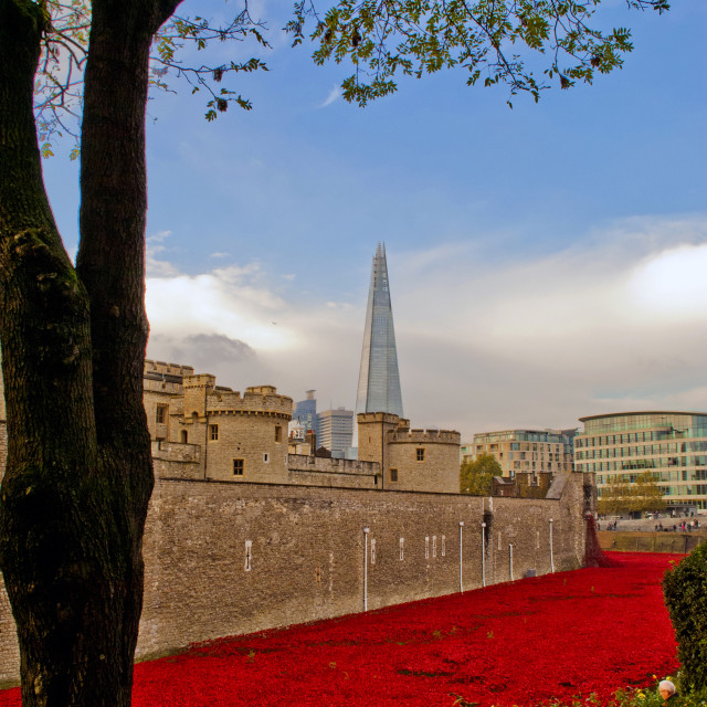 """""""Tower of London poppies Blood Swept Lands"""" stock image"""