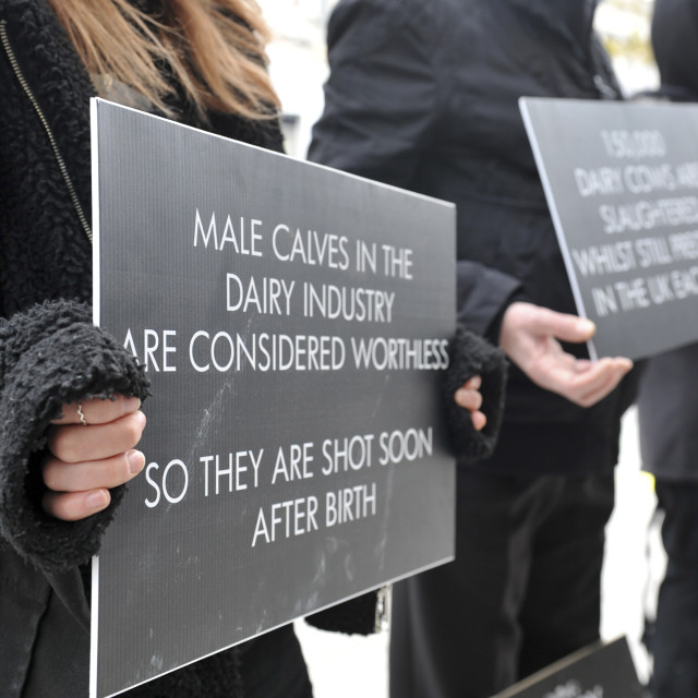 """""""Southampton UK 6th April 2019 On Southampton High Street campaigners for the..."""" stock image"""