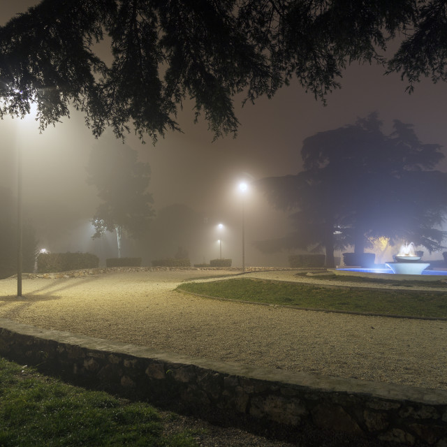 """""""Fog in the park"""" stock image"""