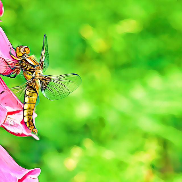 """""""Dragonfly resting on a foxglove flower"""" stock image"""