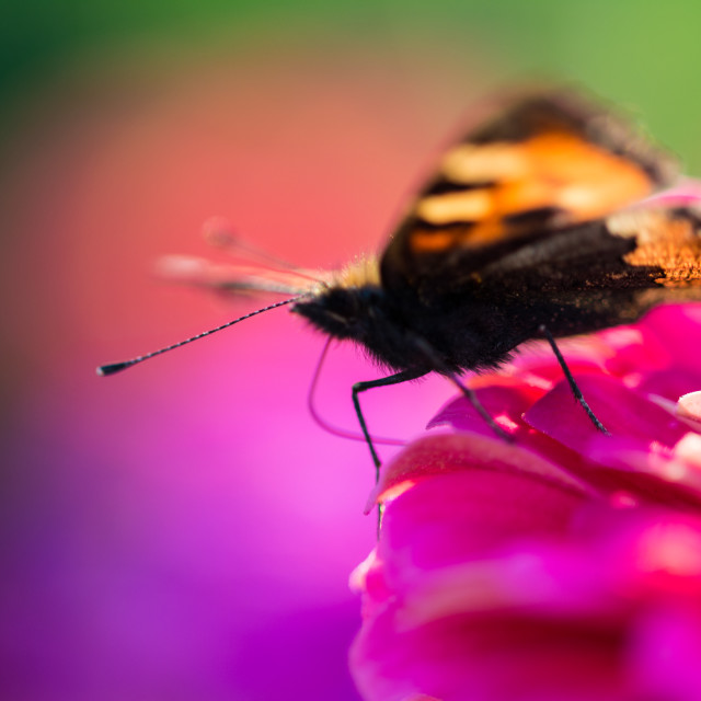 """""""Butterfly on the edge"""" stock image"""