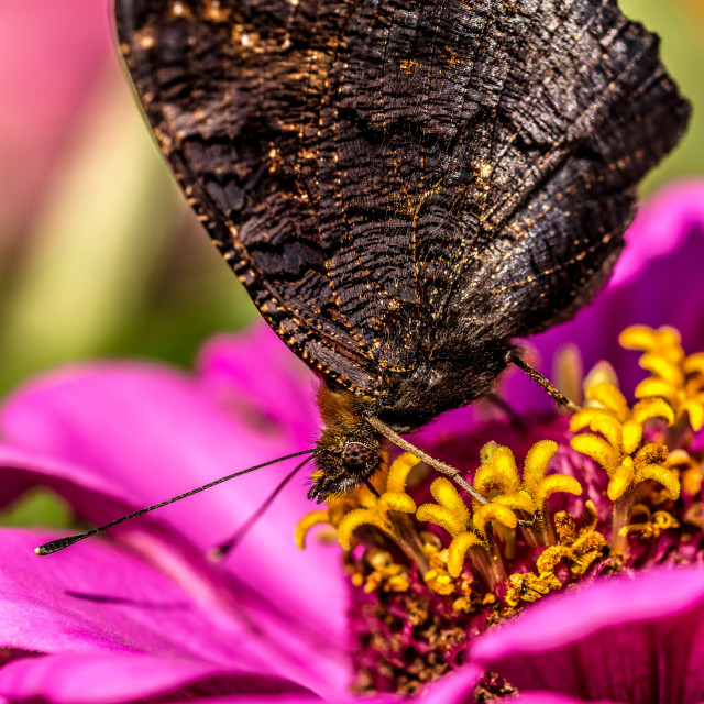 """""""Butterfly pollinating flowers"""" stock image"""