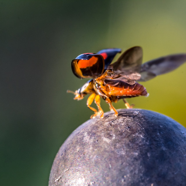 """""""Ladybird about to fly off"""" stock image"""