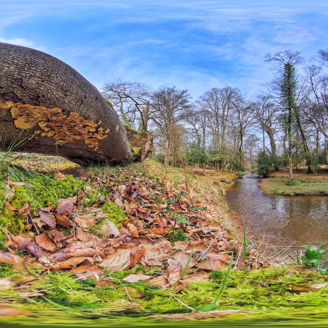 """""""New Forest Stream in Springtime (Equirectangular 360vr)"""" stock image"""