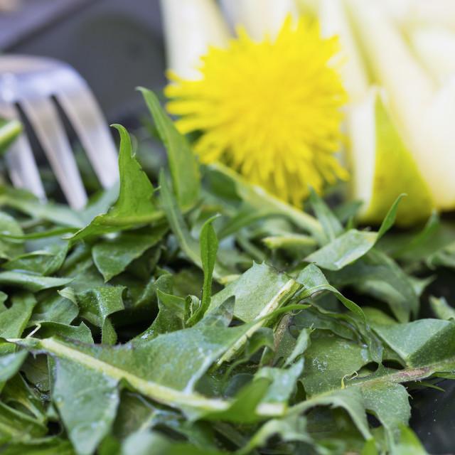 """Dandelion salad"" stock image"