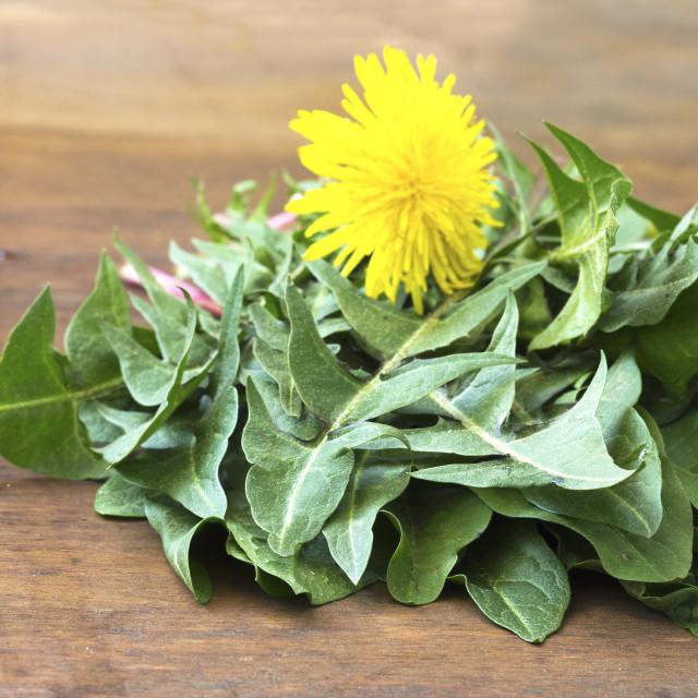 """""""Dandelion leaf"""" stock image"""
