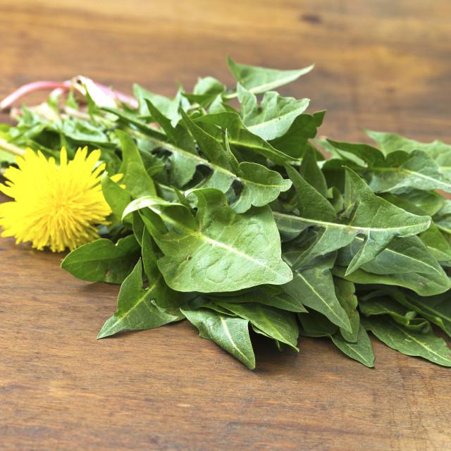 """Raw organic dandelion greens"" stock image"