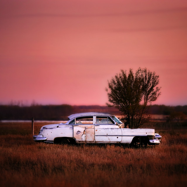 """""""A vintage car with tree growing out of hood abandoned in a pasture in a autumn countryside landscape under a purple sunset"""" stock image"""