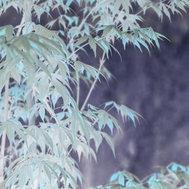 """""""Elegant Japanese zen style bamboo tree"""" stock image"""