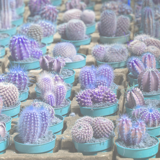"""""""Abstract blue cactus plants in pots"""" stock image"""