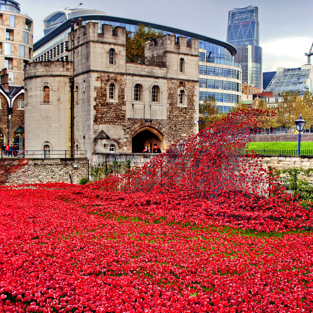 """""""Tower of London Poppy Poppies"""" stock image"""