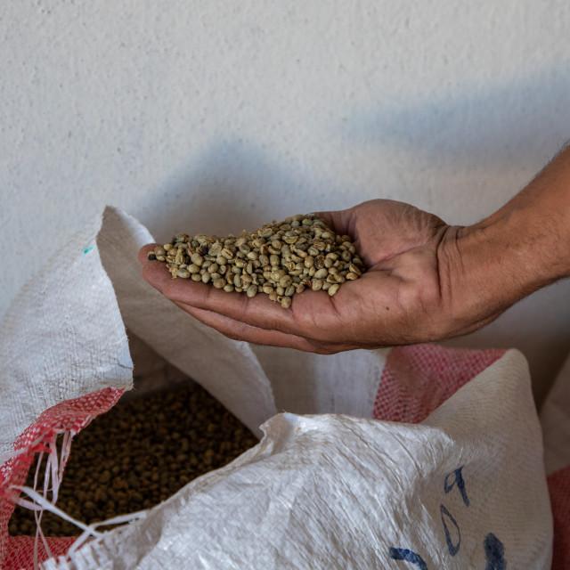 """Yemeni coffee beans in the hand of a seller, Najran Province, Najran, Saudi..."" stock image"