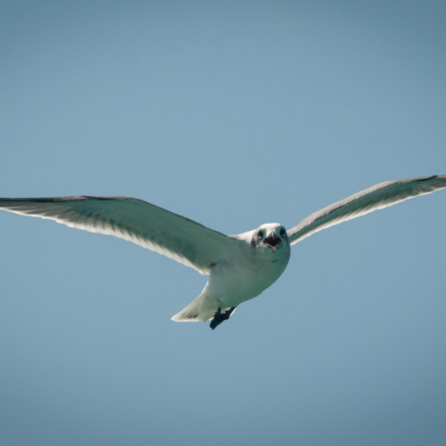 """Seagull on the Hunt"" stock image"