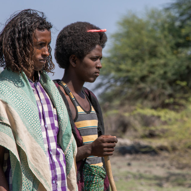 """Afar tribe men with hairstyles showing their marital status, Afar region,..."" stock image"