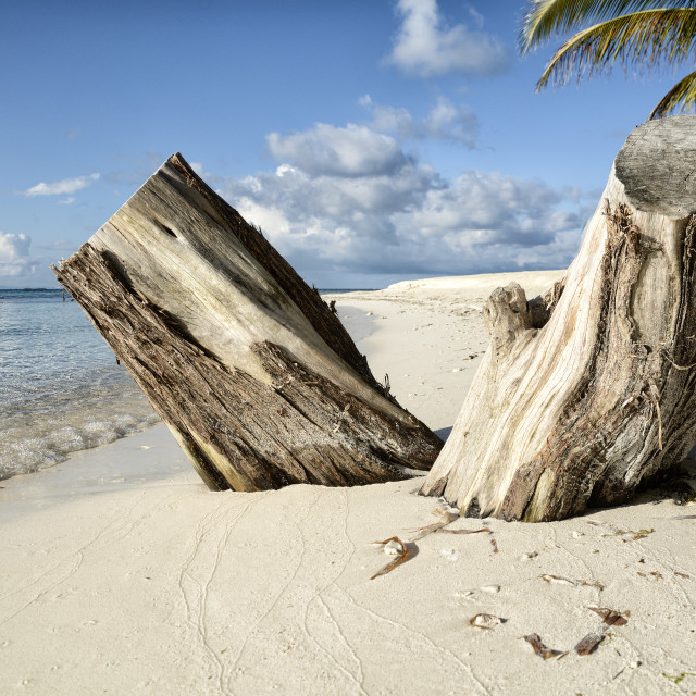 """""""Tropical coral beach"""" stock image"""