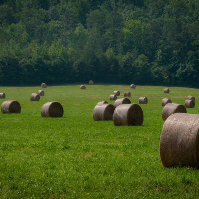 """""""Hay Bales on a Southern Farm"""" stock image"""