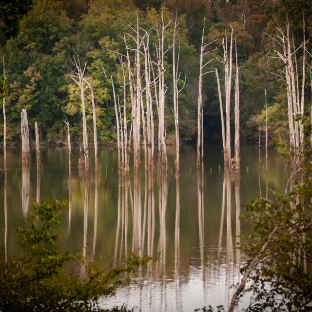 """Trees in the Alabama River"" stock image"