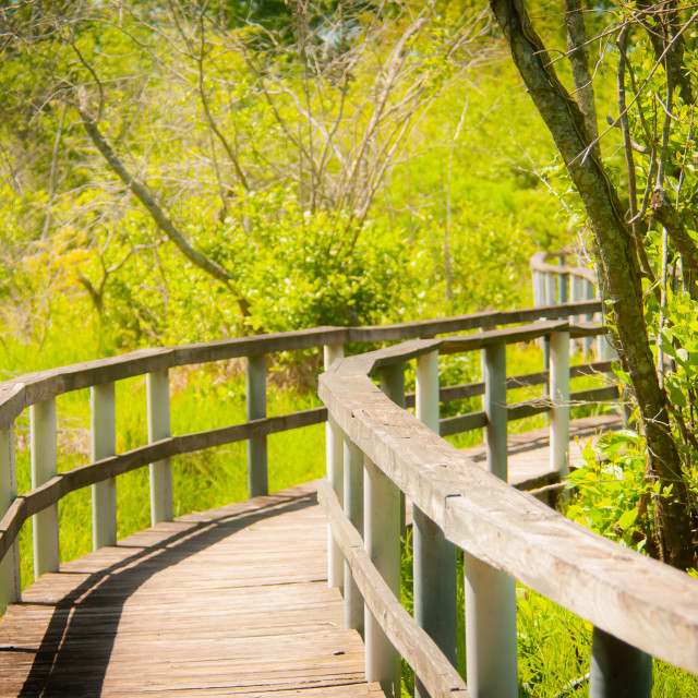 """The Boardwalk at Alligator Creek Birding Trail - Piedmont Platea"" stock image"