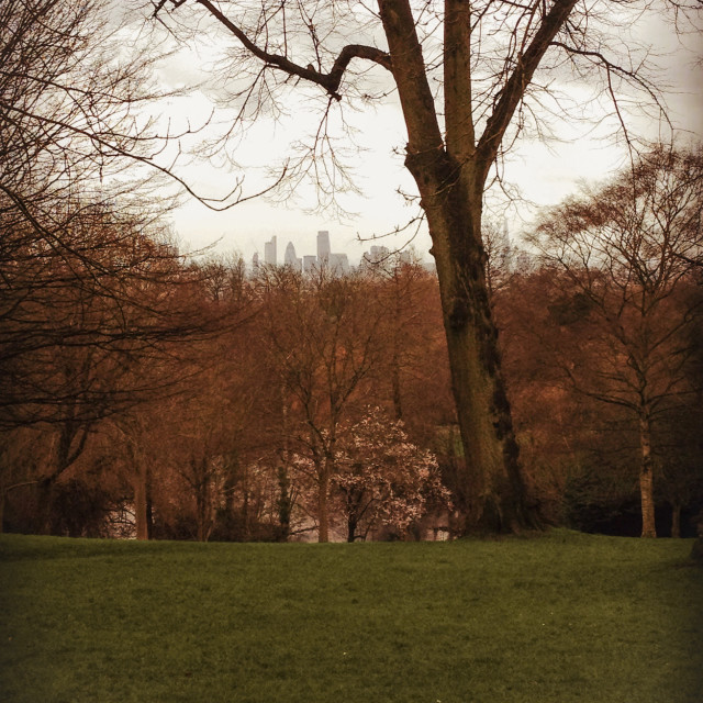 """""""skyline from the park"""" stock image"""