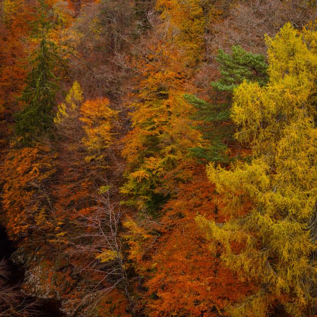 """Autumn colours at Pass of Killiecrankie - Scotland"" stock image"