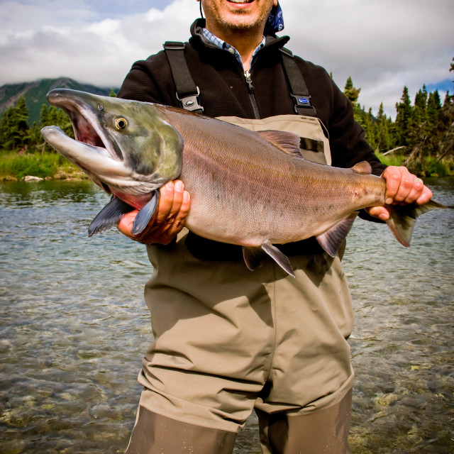 """Alaskan Sockeye Red Salmon (Oncorhynchus nerka) Catch on Kijik Lake near Lake Clark National Park"" stock image"