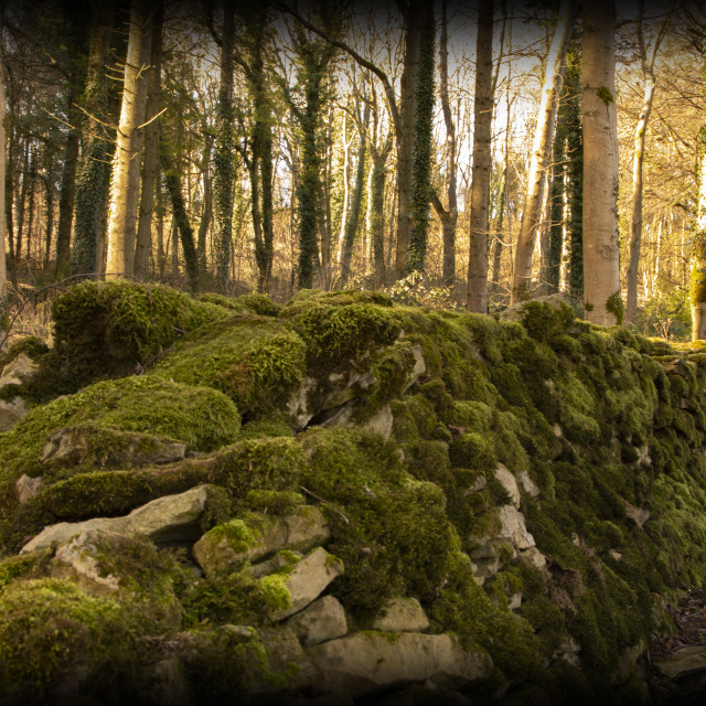 """Mossy wall"" stock image"