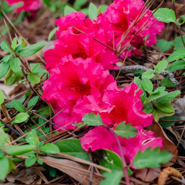 """""""May flowers in April?"""" stock image"""