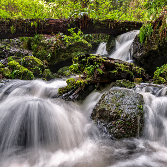 """A Small Waterfall in the Rain Forest, Northern California"" stock image"
