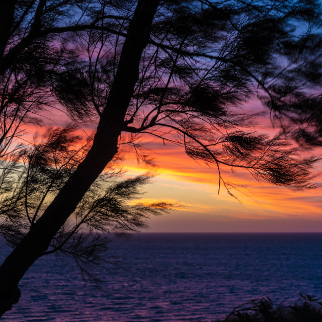 """""""Silhouette of coastal needle tree against orange sunset at Indian Ocean in..."""" stock image"""
