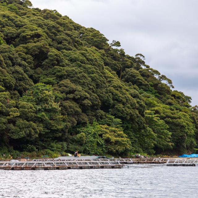 """""""Fish farm in the sea, Kyoto prefecture, Ine, Japan"""" stock image"""