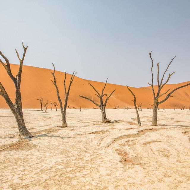 """""""Deadvlei, Namibia"""" stock image"""