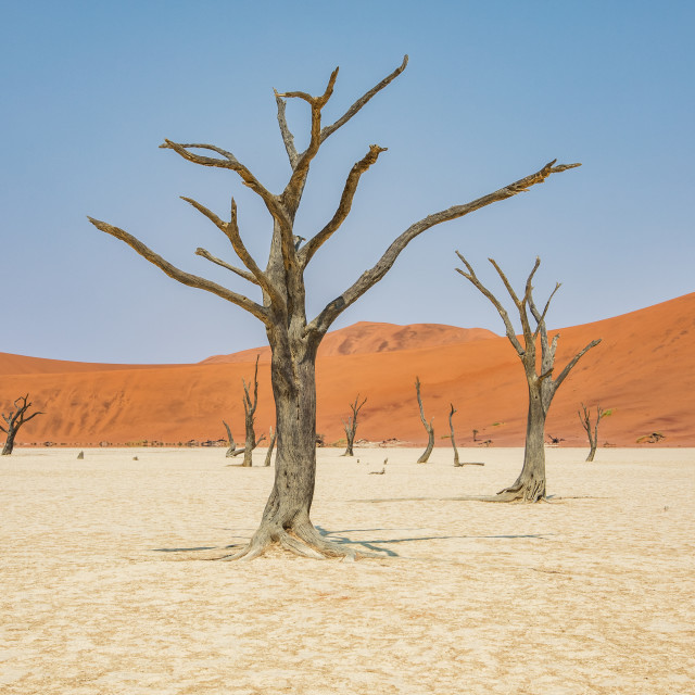 """""""Dead trees of Namibia"""" stock image"""