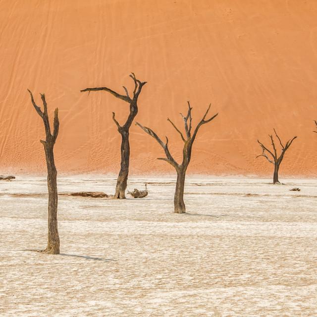 """""""Dead trees of the Namib desert"""" stock image"""