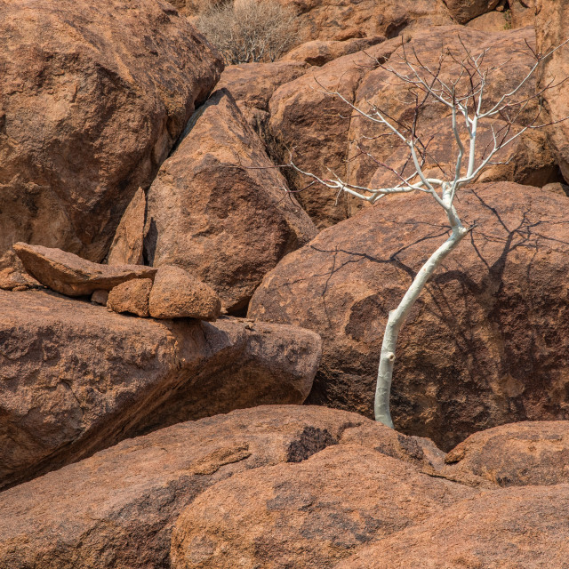 """White trees of Demaraland, Namibia"" stock image"