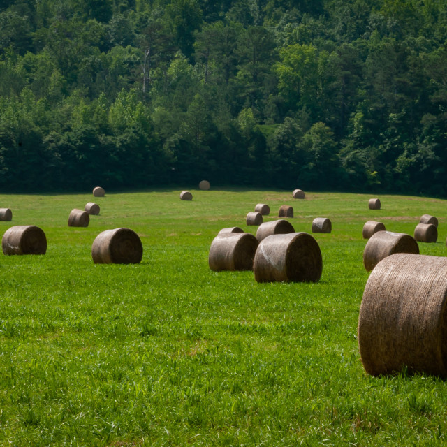 """Haybales in the Green Pasture"" stock image"