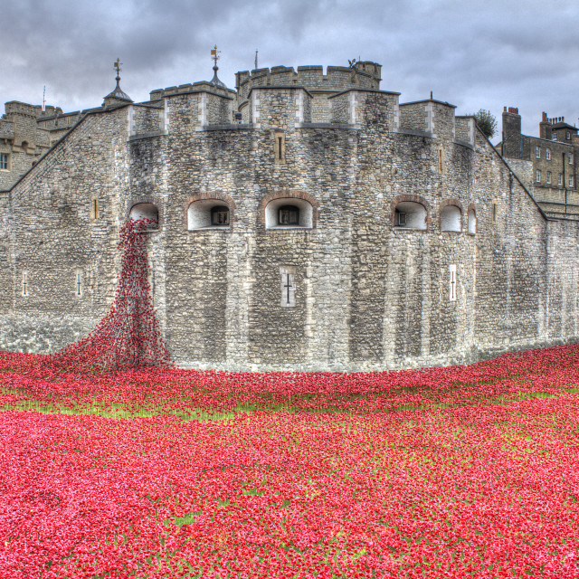 """""""Tower of London - The Poppies"""" stock image"""