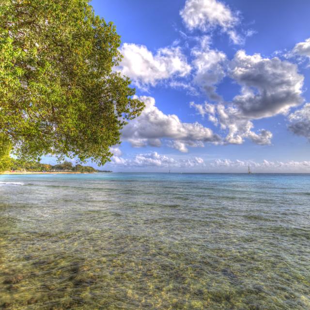 """Barbados Summer"" stock image"