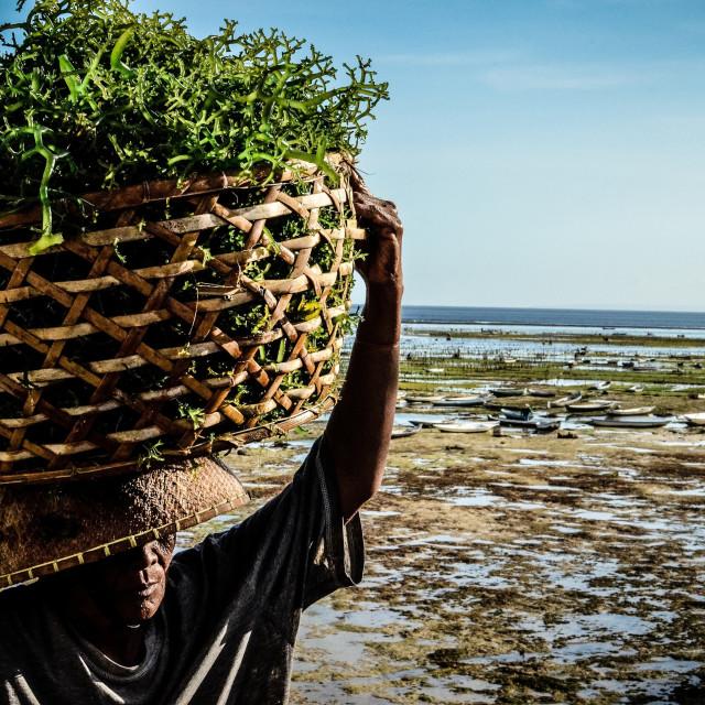 """seaweed man"" stock image"