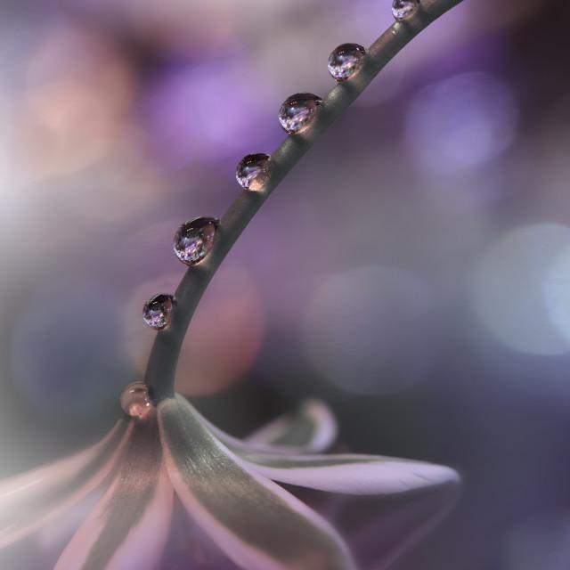 """Beautiful Nature Background.Water drop.Macro Shot of Amazing Spring Magic Flowers."" stock image"