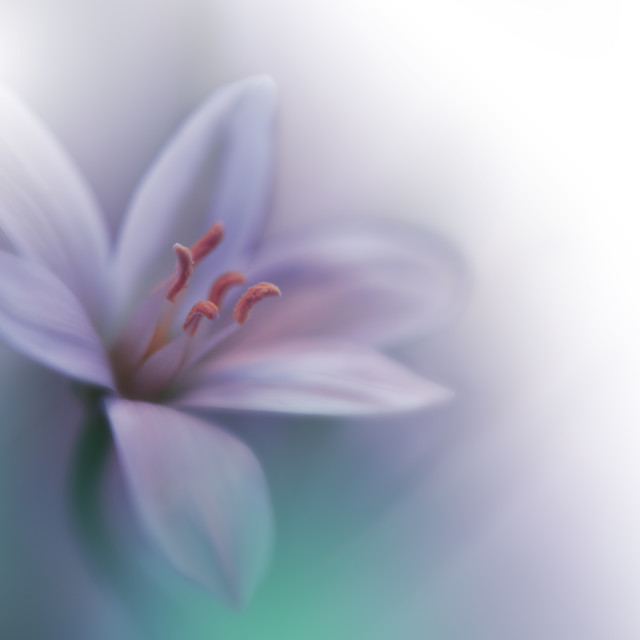 """Beautiful Green Nature Background.Macro Shot of Amazing Spring Magic Flowers."" stock image"